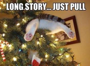 Christmas cat stuck